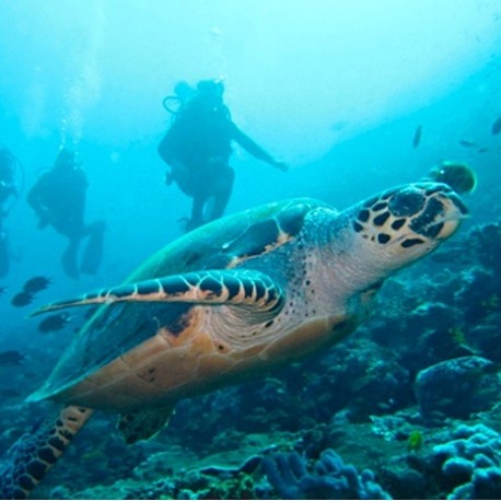 3 Day Komodo Snorkelling Tour